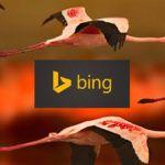 Lifting Group y Bing España cierran un acuerdo de partnership en eShow Madrid