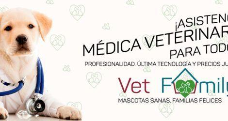 Vet Family, nuevo cliente servicios Agencia SEO y Agencia SEM